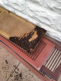 Bat Removal Omaha | How Do I Know If I Have Bats - Bat Guano of Window Shutters